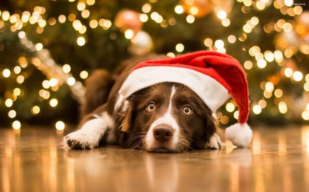 navidad-mas-alla-del-cole